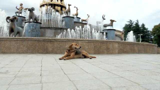 The-dog-lies-on-the-road-Georgia-Kutaisi