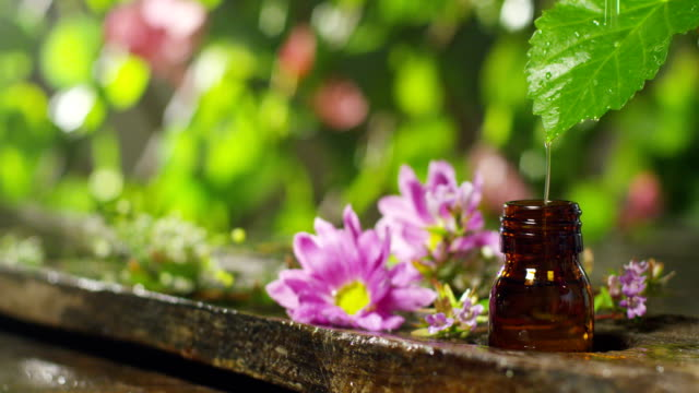 blend-of-essential-oils-with-water-drops-scents-and-aromas-in-aromatherapy-for-wellness-and-spa-concept-of-beauty-fragrant-essential-oil-essence-drops-fall-from-a-leaf-into-pool-in-wellness-center