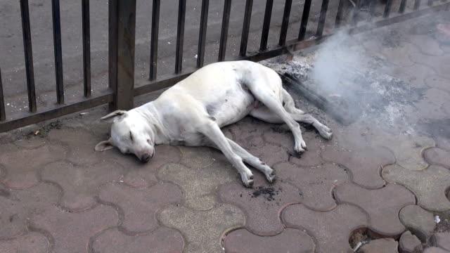 Perro-durmiendo-y-el-humo-de-un-fuego-en-Mumbai-street-India