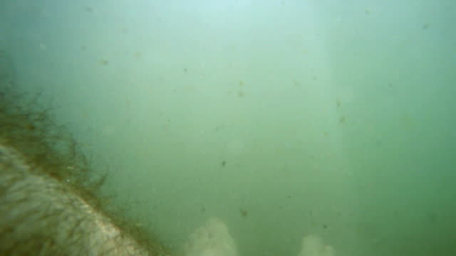POV-on-legs-of-dead-man-body-that-float-underwater