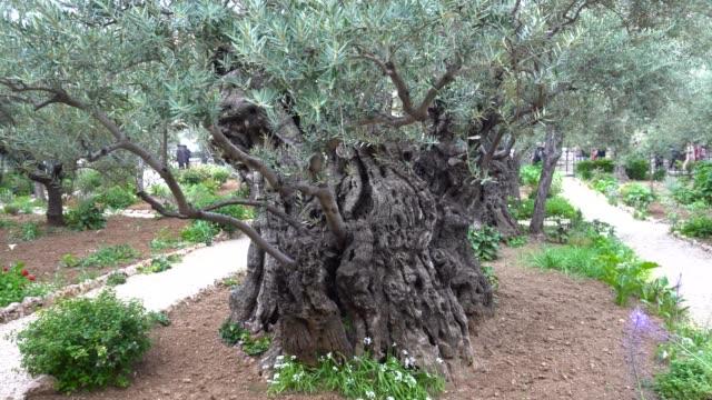 Jardín-de-Getsemaní-Jerusalén-Ciudad-vieja