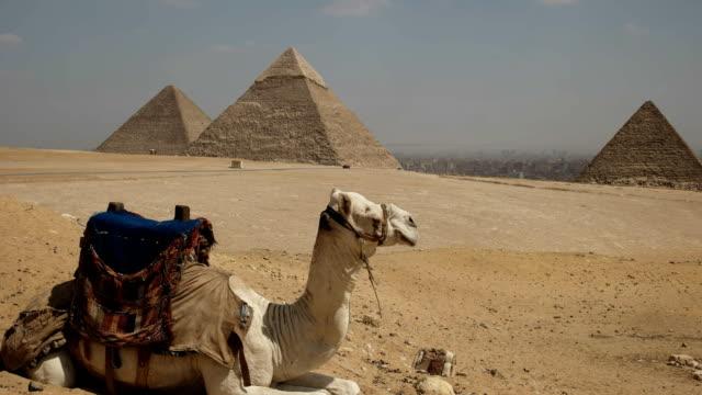 Kamel-mit-den-Pyramiden-von-Gizeh-in-der-Ferne-sitzen
