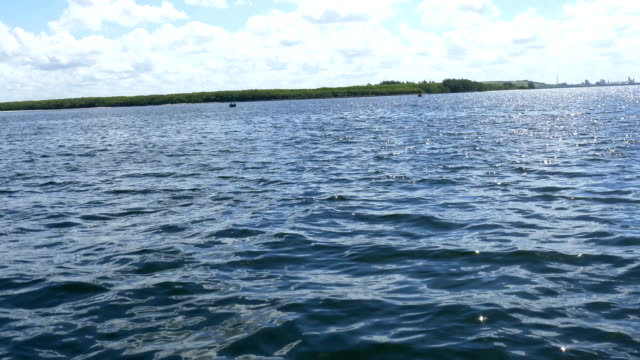Several-dolphins-swimming-in-Florida-waters