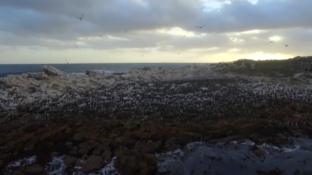 Antena-de-100-de-pingüinos-y-aves-marinas-al-atardecer-en-Betty\-s-Bay-Sudáfrica