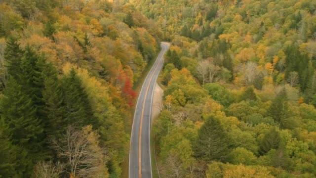 Vista-aérea-del-abejón-de-coche-conduciendo-en-otoño-/-otoño-hoja-follaje-en-una-carretera-de-alta-montaña-Colores-amarillo-naranjas-y-rojos-vibrante-en-Asheville-Carolina-del-norte-en-las-montañas-Blue-ridge-