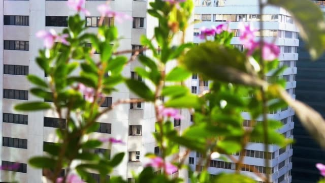 Beautiful-flowers-on-a-balcony-in-the-city---early-relaxing-morning-