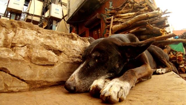 Perro-duerme-en-las-escaleras-de-Manikarnika-en-backgrond-gran-pila-de-leña-cerca-de-las-orejas-sacudir-en-el-viento-quema-Ghat