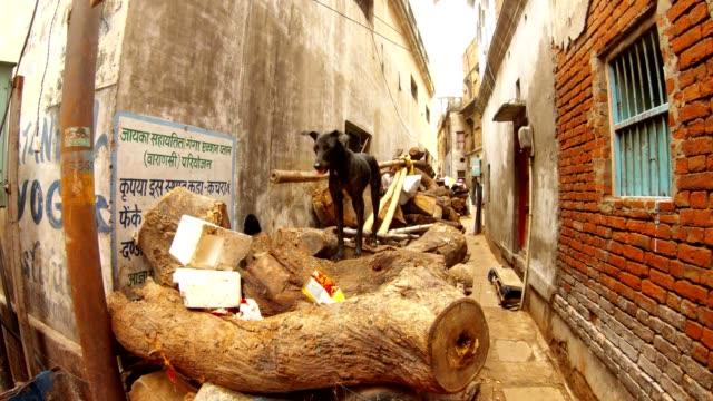 Perro-negro-de-pie-en-pila-de-leña-para-la-cremación-en-Manikarnika-Ghat