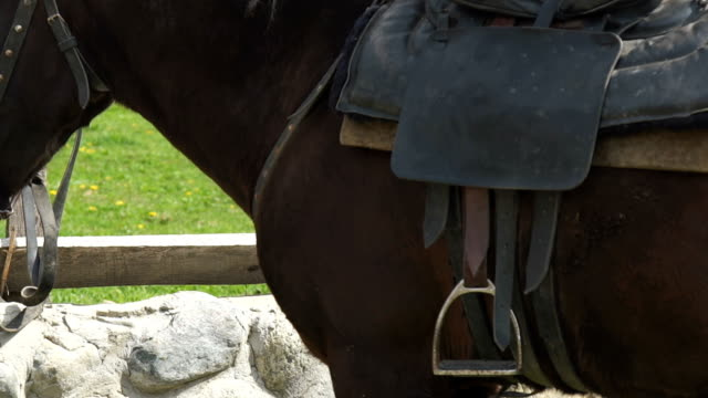 Close-up-on-chestnut-horse-grazing