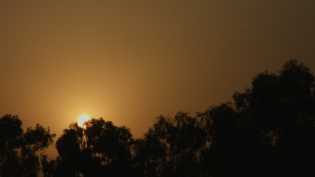 Locked-on-shot-of-trees-at-sunrise-Delhi-India