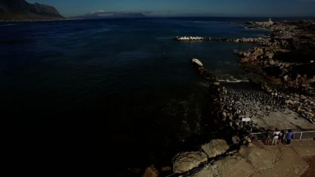 Aerial-Flight---Zuschauer-Pinguine-am-Meer