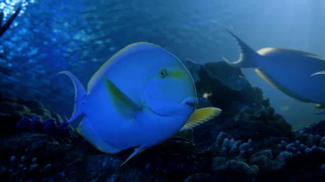 El-acuario-peces-tanque-Coral-Arrecife-animales-y-naturaleza