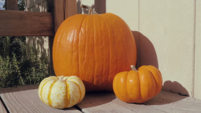 Dolly-In-Towards-Fall-Pumpkins