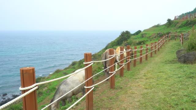 Un-caballo-en-la-playa-de-la-isla-de-jeju