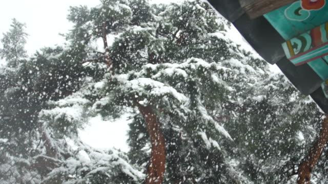 Gangneung-Corea-del-sur-cae-nieve-en-árbol-fino