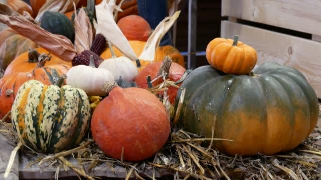 Mercado-de-hortalizas---lotes-de-diversas-calabazas-