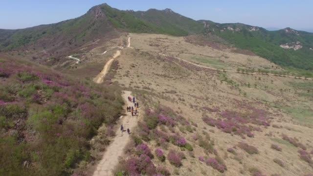 Cheoljjuk-Royal-Azalea-Blooming-in-Hwangmae-Mountain-South-Korea-Asia