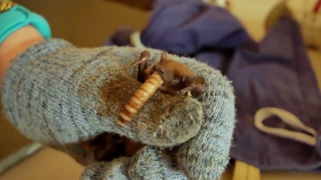 Murciélagos-comen-gusanos-después-de-hibernación-de-invierno