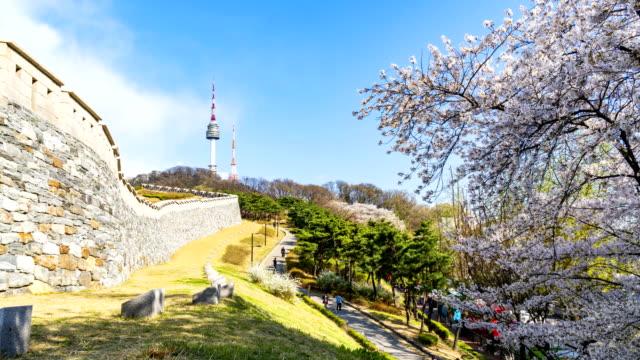 Cherry-blossom-of-Spring-in-Seoul-South-Korea