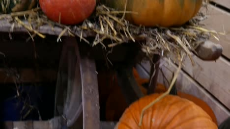 Vegetable-Market---lots-of-various-pumpkins-