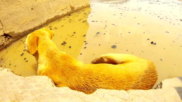 Perro-de-jengibre-en-las-escaleras-en-el-agua-con-brasas-negras-río-Ganges-en-cremación-Ghat