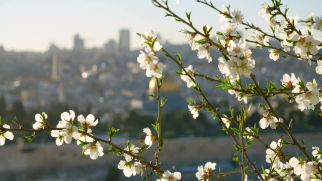 The-Temple-mount-in-old-city-Jerusalem-with-flowers-in-the-foreground