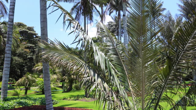 Bogota-palms-and-tropical-plants-with-blue-sky