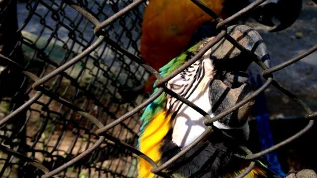 Papagaio-Parrot-inside-bird-cage