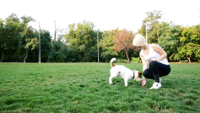 Joven-formación-poco-lindo-jack-terrier-russel-en-el-parque,-cámara-lenta