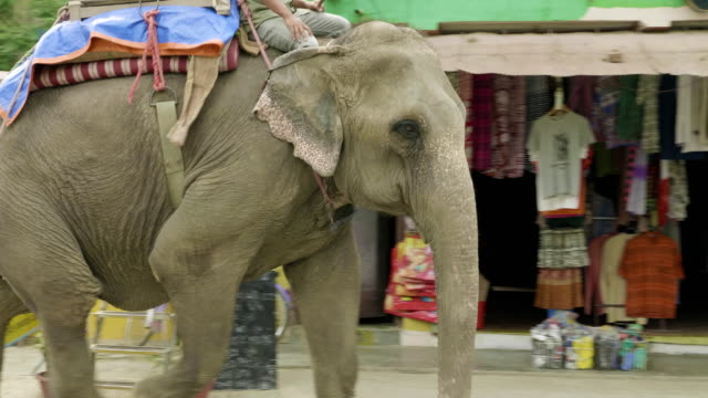 Elephant-goes-on-the-street-in-the-city-of-Nepal-Chitwat-national-park-