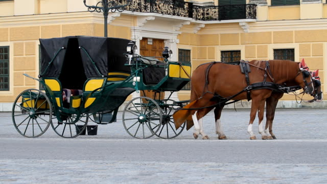 Horses-for-hire-in-Vienna
