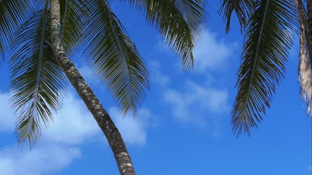 4K-Palmtree-close-up-shot