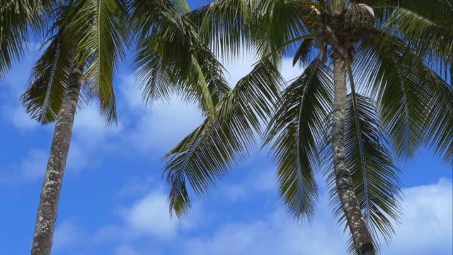 4K-Paradise-island-holiday---palm-trees-panorama