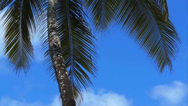 4K-Palm-tree-leaves-dancing-in-the-wind