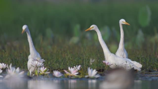 Herde-von-Reiher-im-Lotus-Blume-Teich