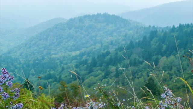 Flores-de-verano-Soplando-en-el-viento-Asheville-Carolina-del-Norte-cerca-de-las-montañas