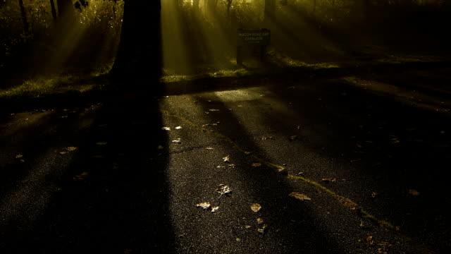 Inclinación-de-niebla-a-través-de-los-árboles-con-vista-al-Blue-Ridge-Parkway