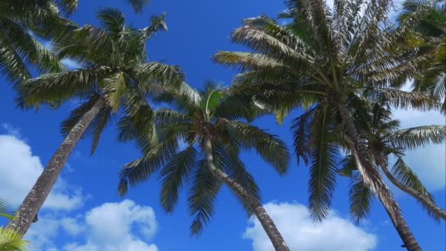 4K-Palmtree-shot---perfect-holidays-on-a-paradise-island