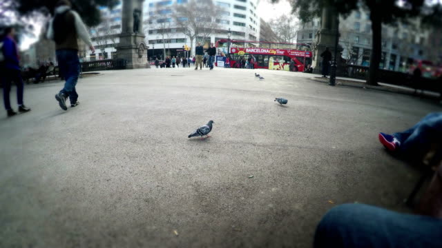Tourist-pov-interacting-with-pigeons-on-Plaza-Catalunya-while-sitting-on-bench