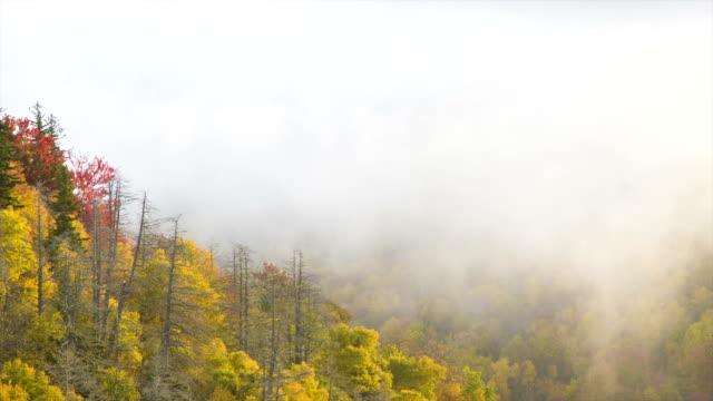 Inclinación-del-follaje-de-otoño-a-través-de-la-neblina-en-el-cielo-a-la-tierra