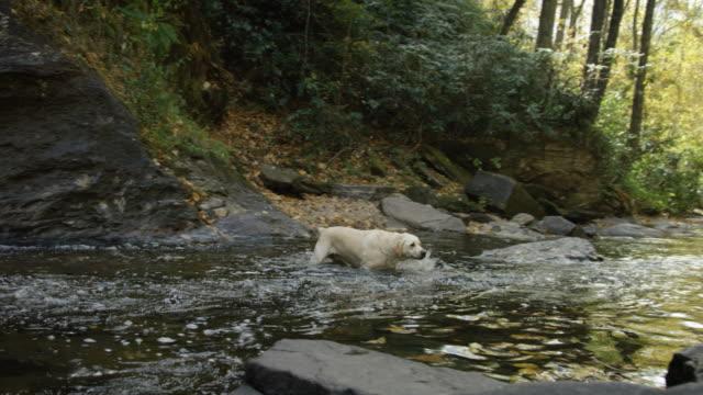 Río-perro-(cámara-lenta)