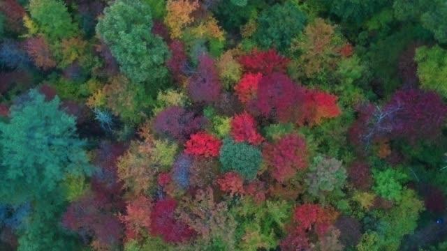 Luft-Drohnenansicht-des-Herbst--/-Herbstblattlaubs-auf-dem-Highway-215-von-oben-Lebendige-gelbe-orange-und-rote-Farben-in-Asheville-NC-in-den-Blue-ridge-Mountains-