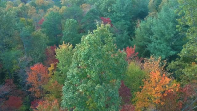 Vista-aérea-de-drones-del-follaje-de-hojas-de-otoño-/-otoño-en-la-autopista-215-desde-arriba-Colores-amarillo-naranja-y-rojo-vibrantes-en-Asheville-Carolina-del-Norte-en-las-montañas-Blue-ridge-