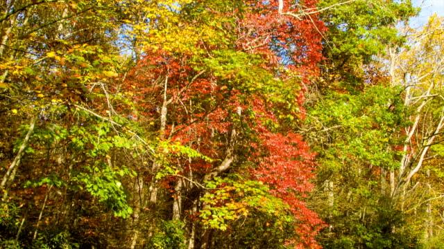Inclinación-color-hasta-los-árboles-de-otoño-en-las-montañas-de-North-Carolina