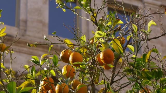 sun-light-mandarin-tree-close-up-4k-spain