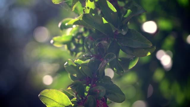 Una-Granada-una-rama-de-un-árbol-frutal-