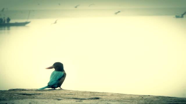 kingfisher-analizar-el-Ganges