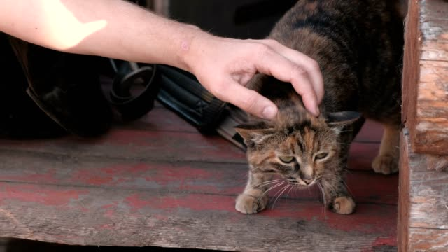 Man-s-hand-stroking-the-cat-on-the-farm-