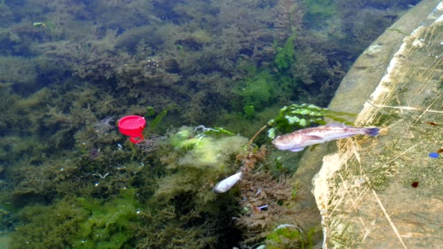 dead-fish-by-the-sea