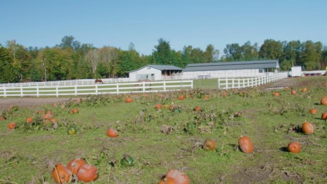 Pumpkins-on-a-Farm-With-Horses